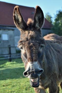 donkey-1470197_960_720
